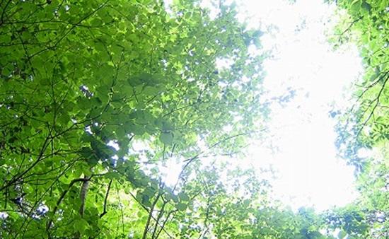 雲のない晴れ渡った空と緑